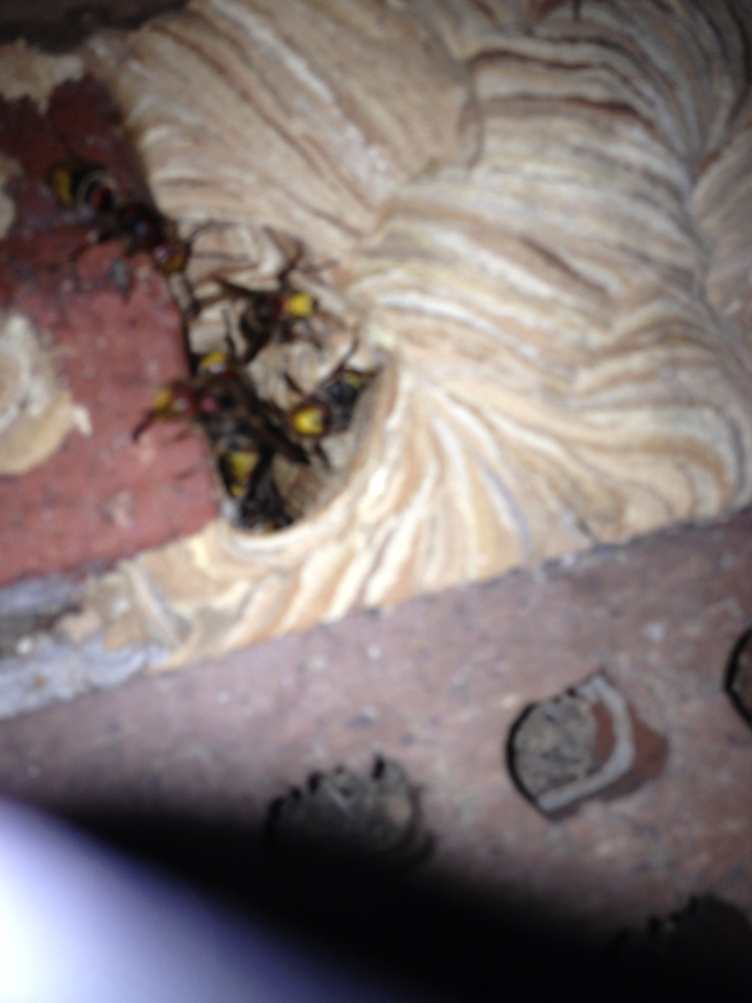 how to kill hornets nest in ground