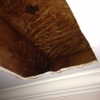 After Bee Hive removed from a ceiling in Johns Creek