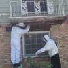 Atlanta Bee HIve Removal