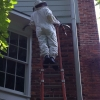 Hornet - Bee Inspection in Johns Creek GA