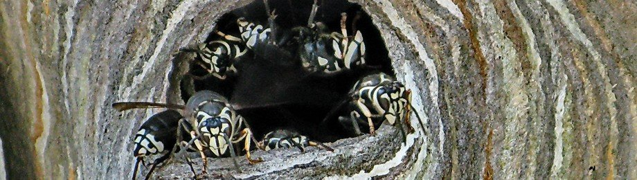 marietta area bee hornet removal services