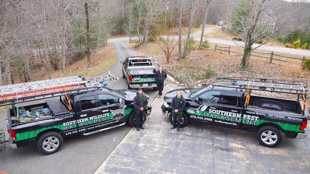 hornet removal team
